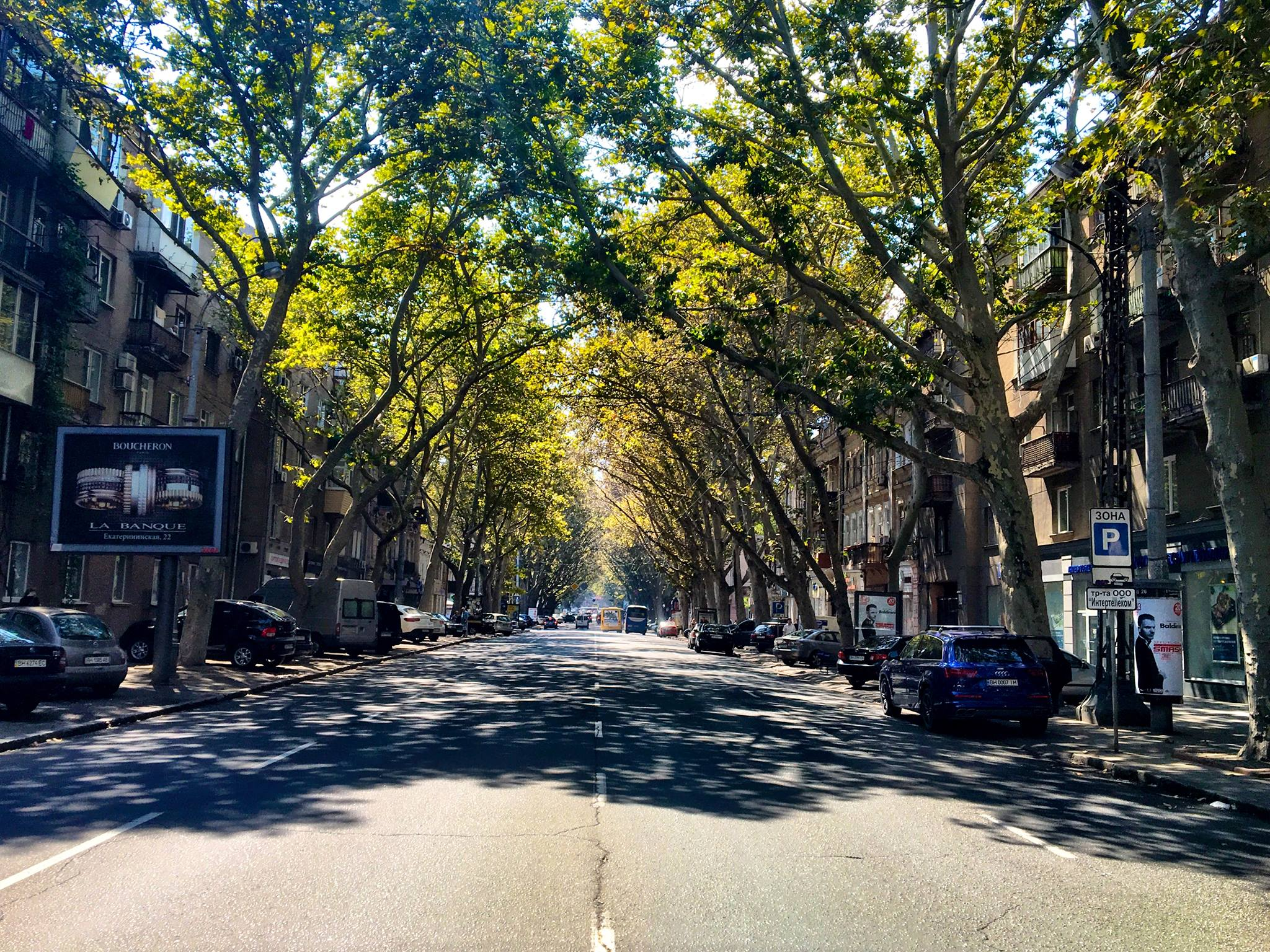 Tree lined street that Terminal 42 is located on
